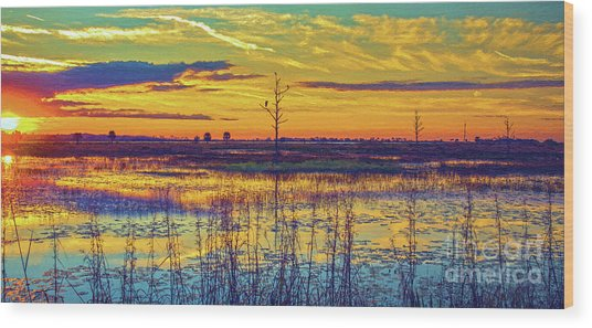 Florida Nature Paradise 2  Wood Print