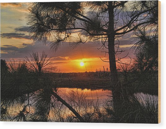 Florida Pine Sunset Wood Print