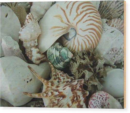 Florida Sea Shells Wood Print