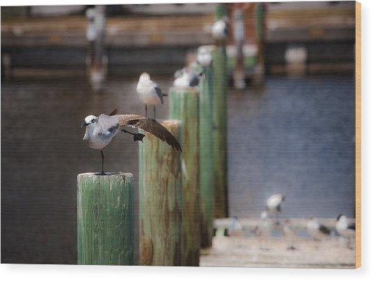 Florida Seagull Playing Wood Print