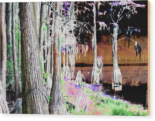 Florida Swamp Wood Print by Peter  McIntosh