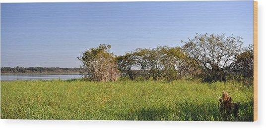 Florida Wetlands Panoramic Wood Print