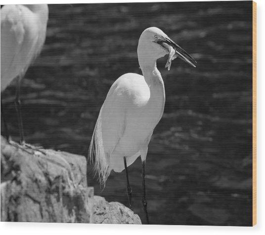 Florida White Egret Wood Print