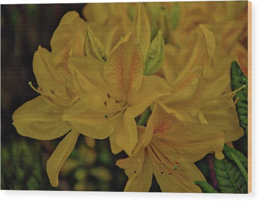 Flower 6 Wood Print