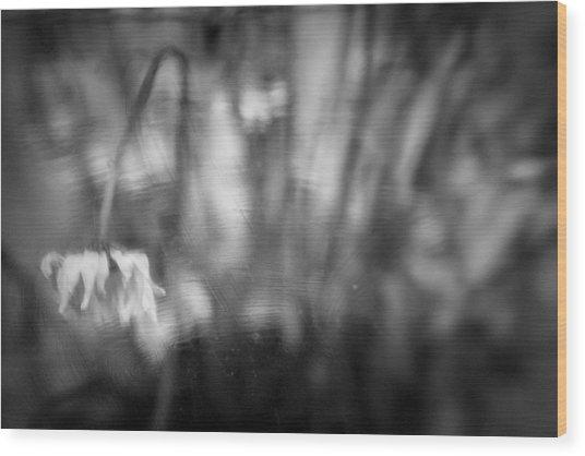 Flower #7421 Wood Print