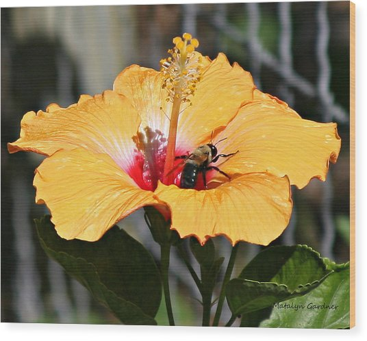 Flower Bee Wood Print