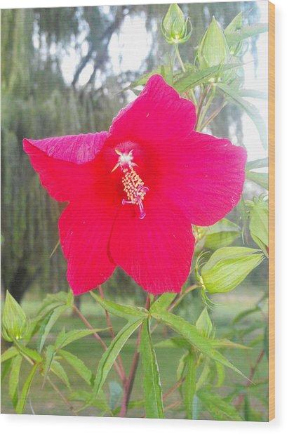 Flower Wood Print by Christy Bearden