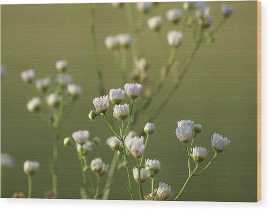 Flower Drops Wood Print