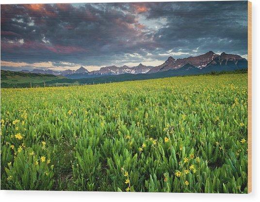 Flower Field And Sneffels Range Wood Print
