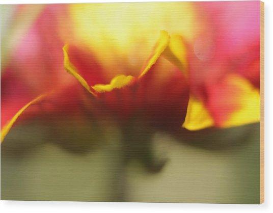 Flower Impressions II Wood Print