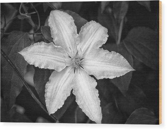 Flower In Black And White Wood Print