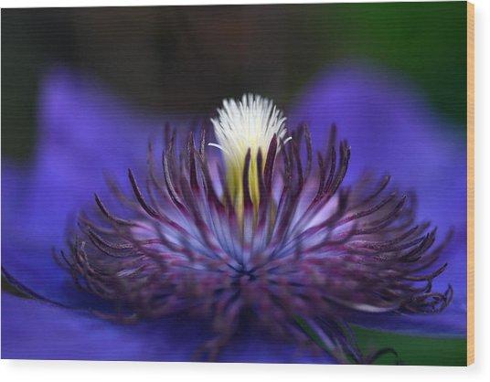 Flower Light Wood Print