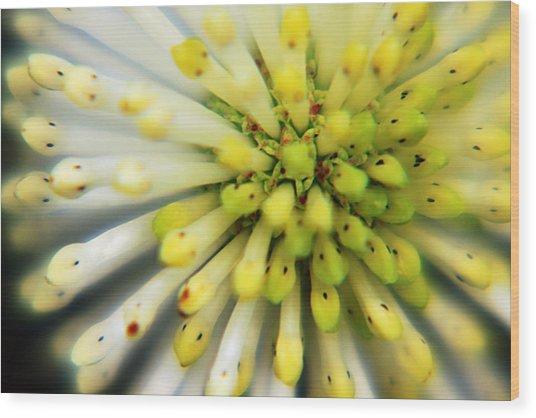 Flower Wood Print by Marcus Adkins