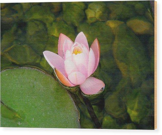 Flower Of Peace Wood Print by Sherwanda Irvin