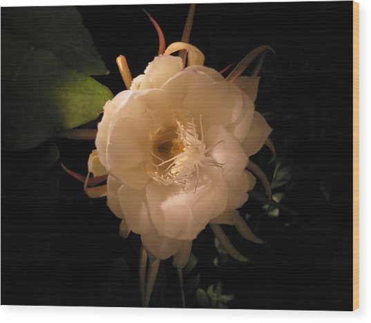 Flower Of The Night 01 Wood Print