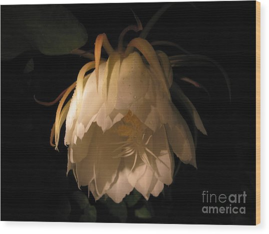 Flower Of The Night 02 Wood Print