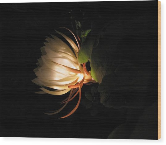 Flower Of The Night 03 Wood Print