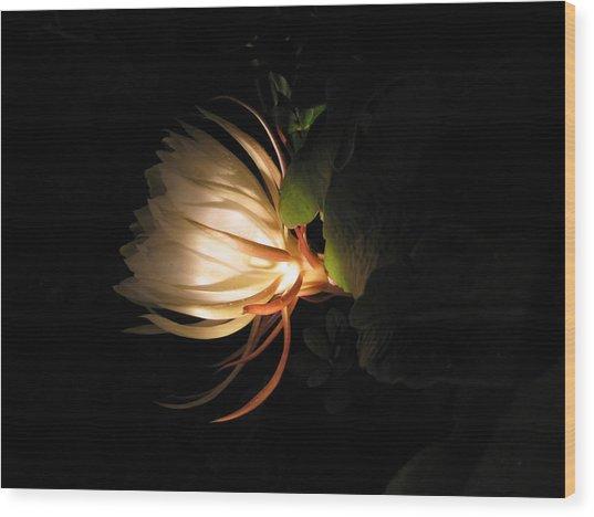 Flower Of The Night 03 Wood Print