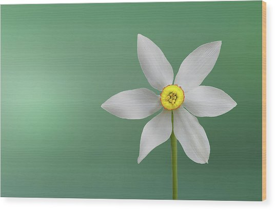Flower Paradise Wood Print