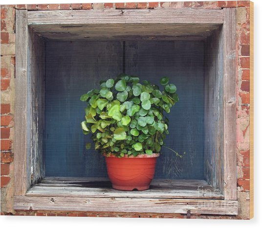 Flower Pot In A Window Wood Print