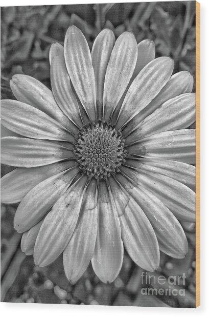 Flower Power - Bw Wood Print