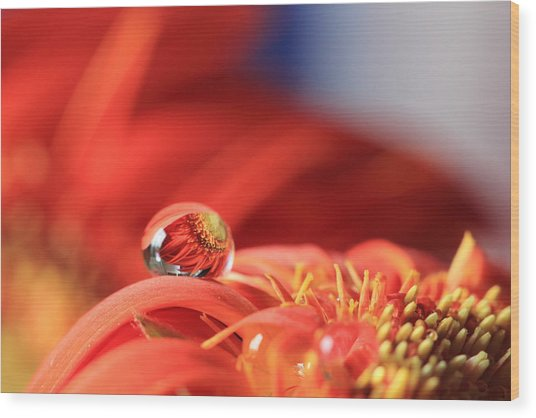 Flower Reflection In Water Drop Wood Print