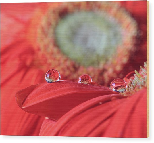 Flower Reflections Wood Print