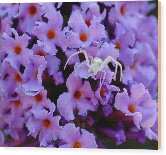 Flower Spider Wood Print