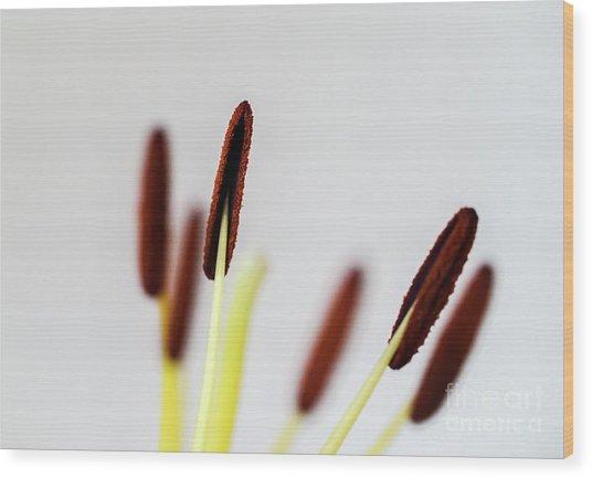 Flower Stalks Wood Print