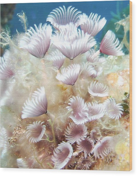 Flower Tube Worms Wood Print by Cherry Woodbury