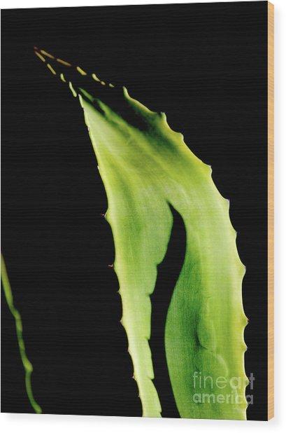 Flower_04 Wood Print