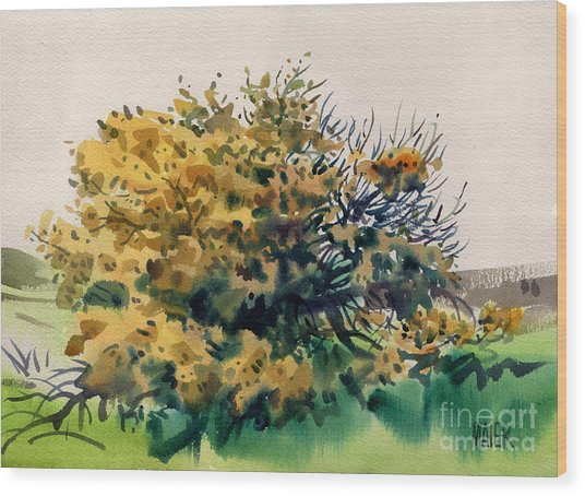 Flowering Acacia Tree Wood Print by Donald Maier