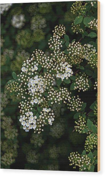 Flowering Bush Wood Print by Robert Ullmann