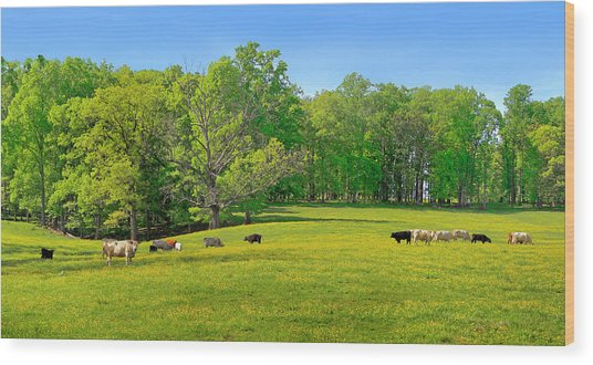 Flowering Cow Pasture Wood Print