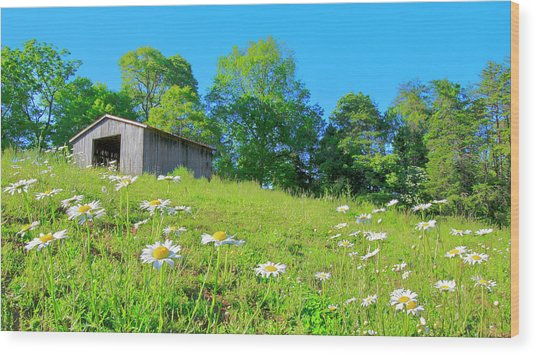 Flowering Hillside Meadow - View 2 Wood Print