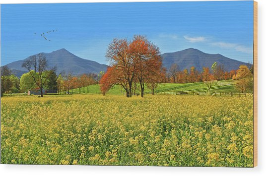 Flowering Meadow, Peaks Of Otter,  Virginia. Wood Print