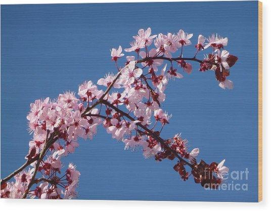 Flowering Of The Plum Tree 4 Wood Print