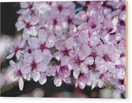Flowering Plum Wood Print