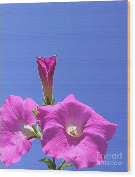 Flowering To Life I Wood Print by Daniel Henning