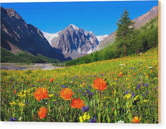 Flowering Valley. Mountain Karatash Wood Print