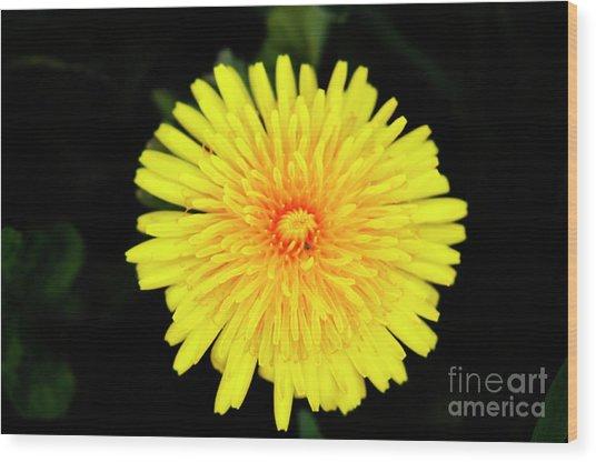 Flowering Weed Wood Print