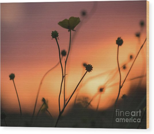 Wood Print featuring the photograph Flowers At Sunset by Paul Farnfield