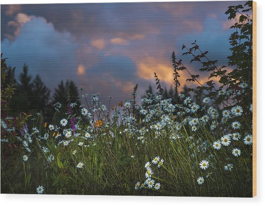 Flowers At Sunset Wood Print