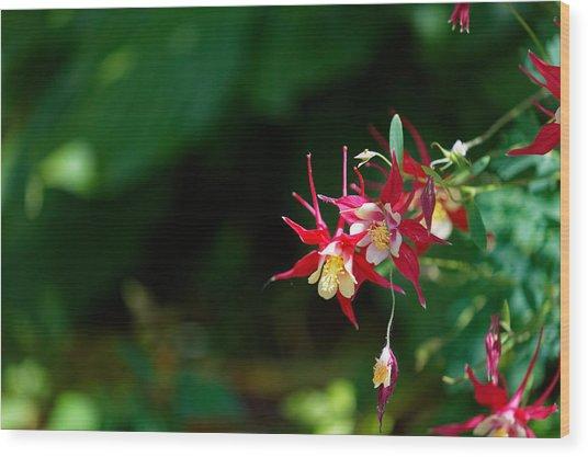 Flowers Of Battery Park Wood Print by M Nuri Shakoor