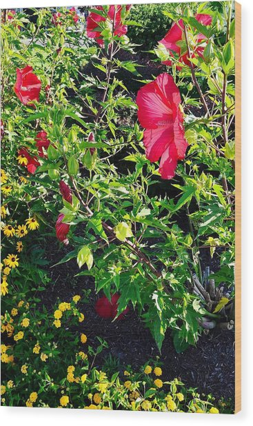 Flowers Of Bethany Beach - Hibiscus And Black-eyed Susams Wood Print