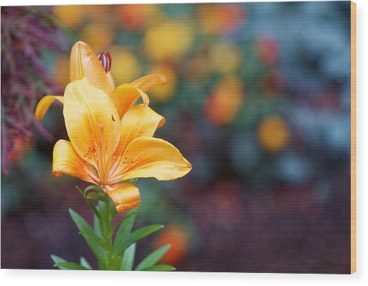 Flowers Of Central Park IIi Wood Print by M Nuri Shakoor