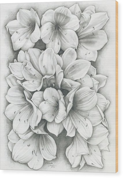 Clivia Flowers Pencil Wood Print