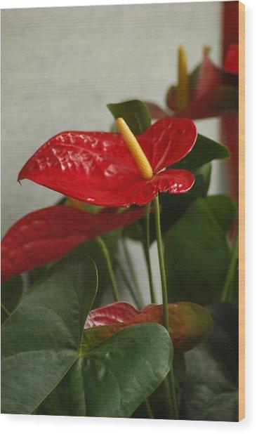 Flowers Rising Wood Print by Lori Mellen-Pagliaro