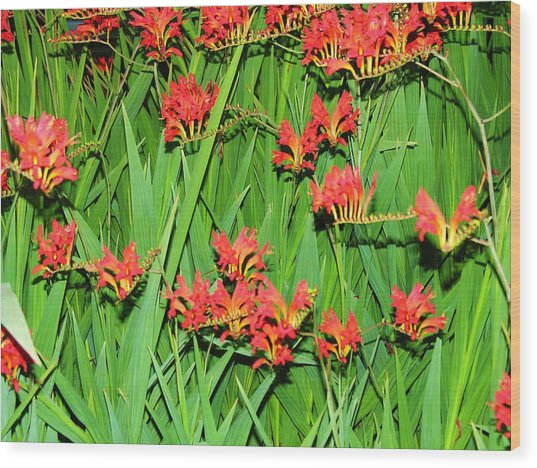 Flowers Singing Wood Print by Mel Crist