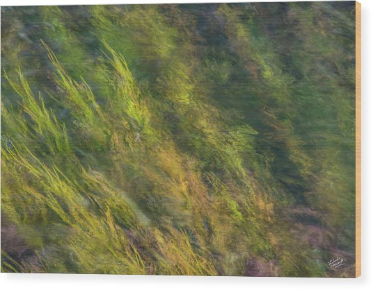Flowing Luminescence Wood Print by Leland D Howard